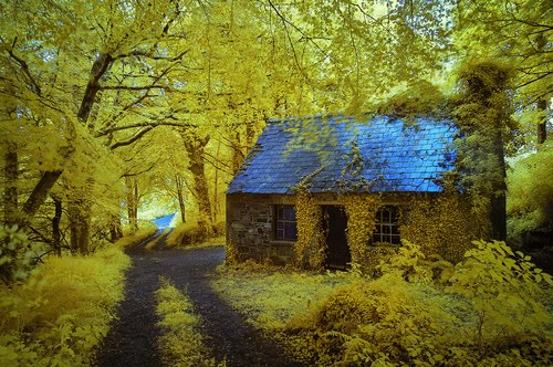 Ancient Forest Cottage, Stradbally, Ireland