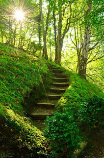 Mossy Stairs, Perthshire, Scotland